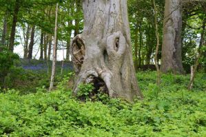 Tree with face by Jenbrooke1