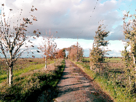 A November Afternoon On the Landway by Nigel-Hirst