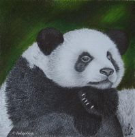 Little panda by Indigoblau
