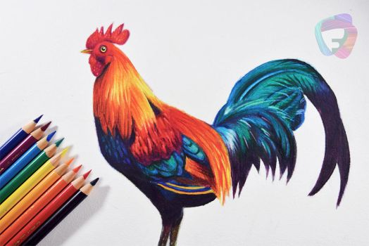 A Rooster - FC polychromos pencils. by f-a-d-i-l