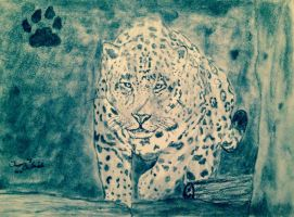 Leopard Stalking by OG7