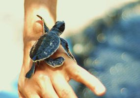 Young Sea Turtle by HerBlankWhitePage