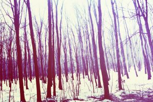 Forbidden forest by Ghindatomica