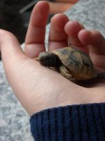 TURTLE IN HAND by YaYaOo