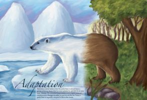 Adaptation - the polar bear by sweetmisery11