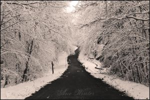 Forest in the winter by neith13