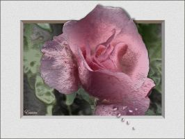 Rainy_Rose by Escara40