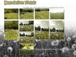 Dandelion Fields Stockpack by Dragoroth-stock