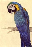 Macaw Colours by firekata