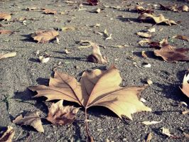 Autumn by AllegnaPhotography