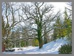 Snow covered tree.L1040113, with story by harrietsfriend
