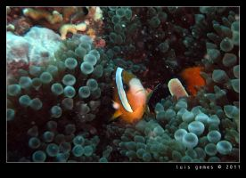 Deep in the Gilis by gomes