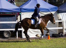 STOCK - Canungra Show 2012 198 by fillyrox