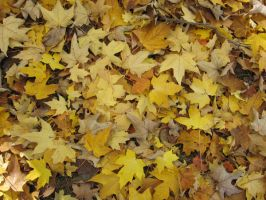 Yellow leaves by CotyStock