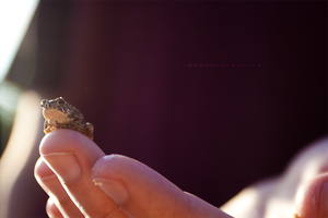 +The Great and Powerful Hypno Toad+ by MeganAllen