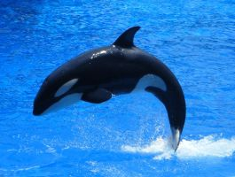 SeaWorld - Graceful by kngdmhrts2