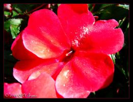 Pinktensive 2... by faithslayer