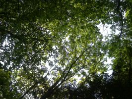 canopy of leaves 0.1 by wispered