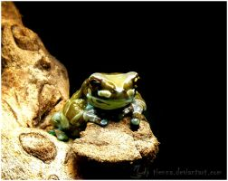 Frog I by Tienna