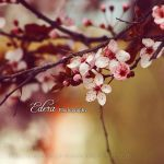 Le printemps I by phoenixgraphixstudio