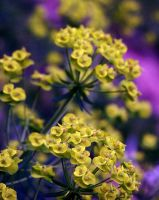 Yellow Specks and Purple by DrivenSphere