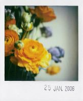 flowers by prismopola