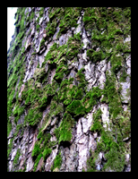 Mossy Bark by theblindalley