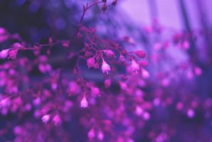 flowers by Maanola