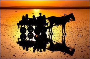 sunshine. by salihguler