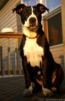 Bully the beautiful by TlCphotography730