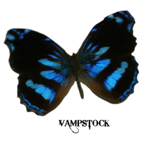 Blue Edges Butterfly PNG Vampstock by VAMPSTOCK