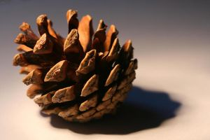 this is not my pine cone... by evelynzee