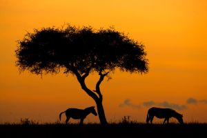 My Africa 67 by catman-suha