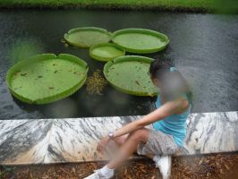 Enjoying the lily pads in the rain by Sorath-Rising