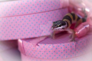 Serena - Gift Wrapped Gecko 1 by creative1978