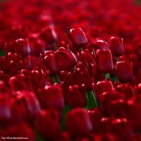 All the flowers in the World by Oer-Wout