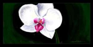 Facebook Graffiti-Orchid by M-Everham