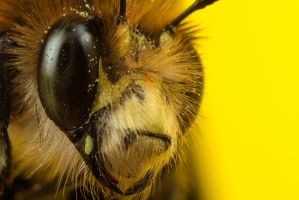 Bee 6 by Alliec