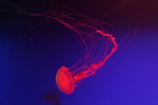 Jellyfish Stock 39 by Malleni-Stock