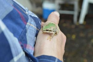 Frog on hand by Love-And-Cyanide88