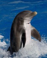 Dolphin by 1snapshot