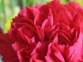 My-Stock - Carnation2 by my-stock