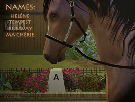 Nameplated halters - DW TS3 by Gipsik