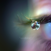 Tears of a Fairy. by dragonfly-oli
