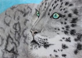 Snow Leopard by Midnight-Sun-Art