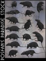Rats 003 Black by poserfan-stock