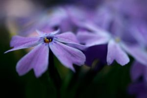 small flowers by Marcin110