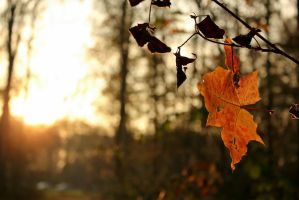 'The fall of a leaf is a whisper to the living' by Janerd