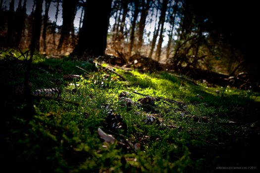 down on moss by antarialus