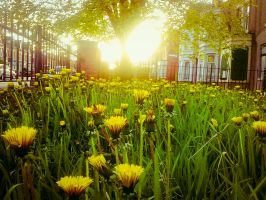 A World in Yellow by Autocrator